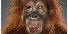 monkey-models33